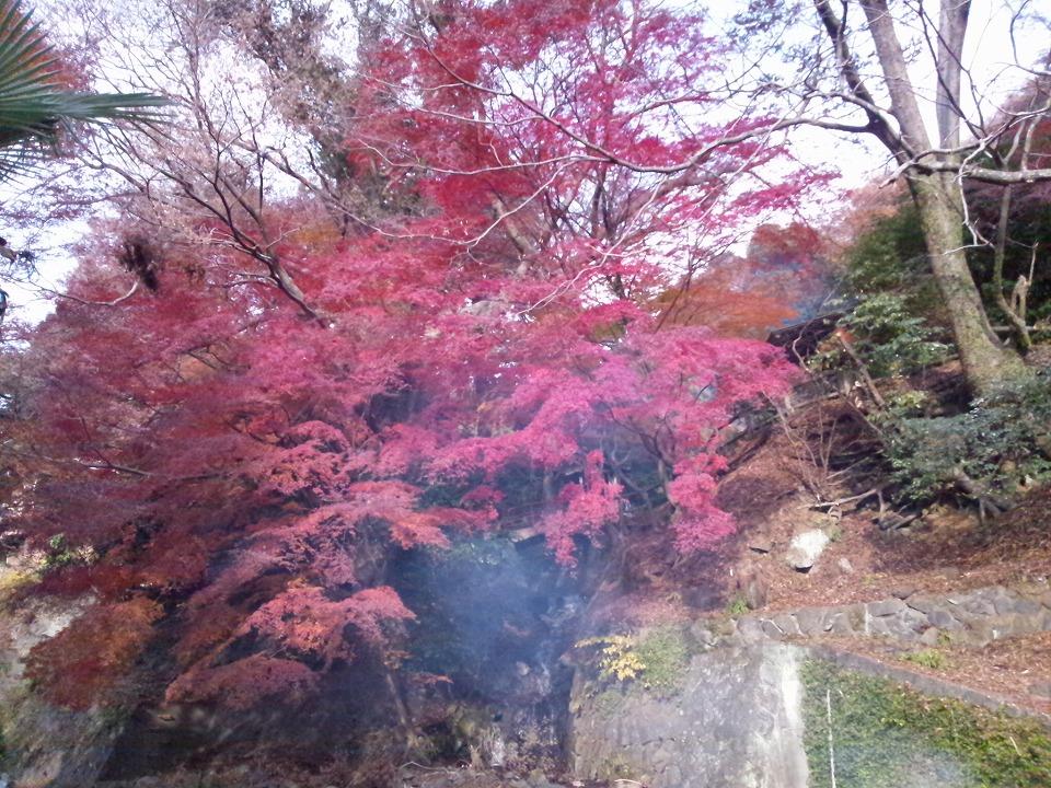 Kimura_002s