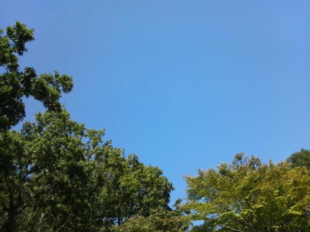 七沢森林公園の空