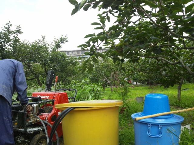 柿畑の消毒